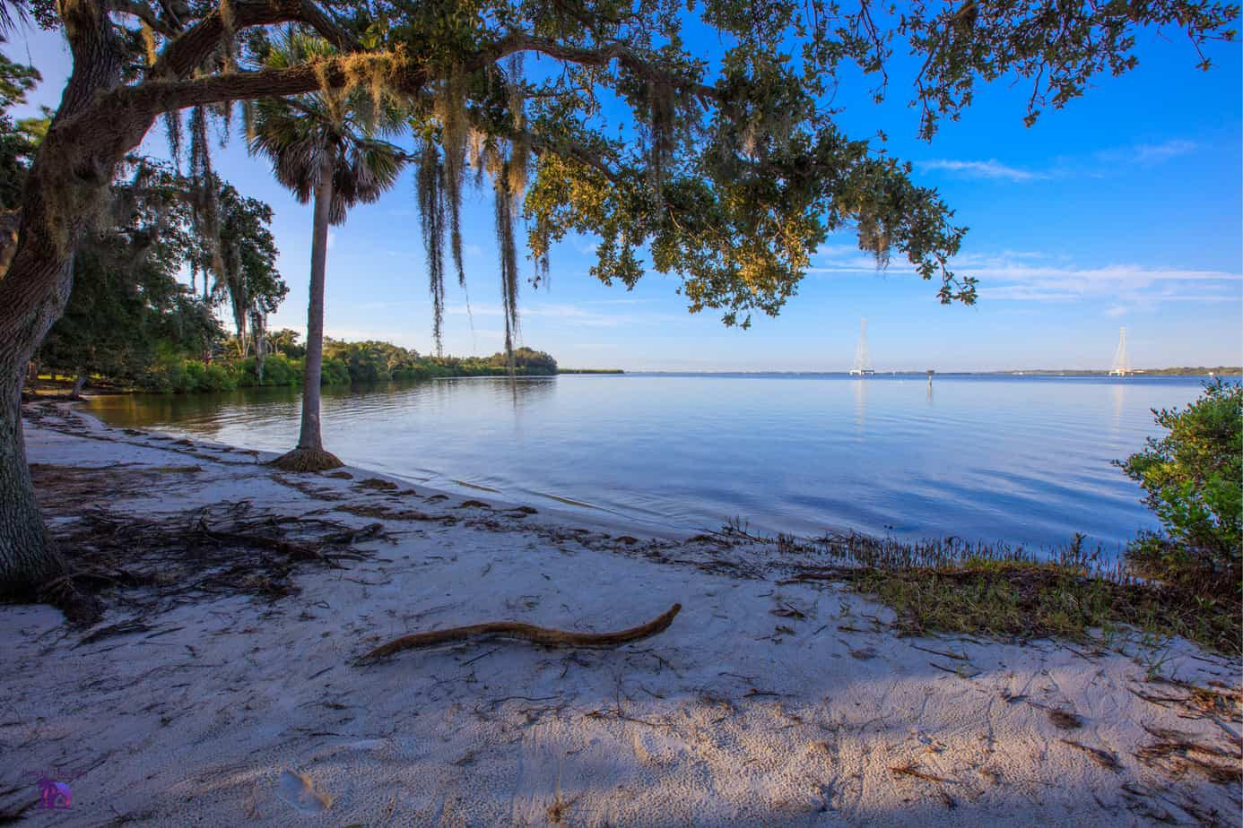 Picture of Mobbly Beach Park located in Oldsmar Florida with beach, trees, and water